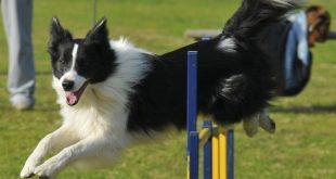 Agility dog: scopriamo che cos'è