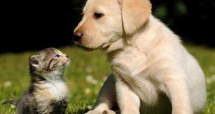 Cuccioli: quando il bambino vuole un compagno a quattro zampe
