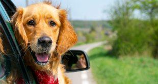 Viaggiare con il cane cosa portarsi dietro
