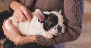 La dermatite atopica nel cane: cause e trattamenti