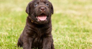 Consigli e informazioni utili per chi vuole adottare un cucciolo