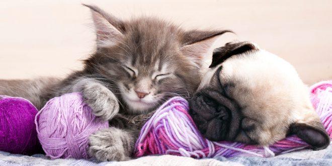 Quante ore al giorno dormono i gatti?