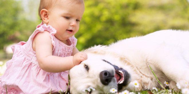 Cani, gatti e cavalli nella Pet Therapy