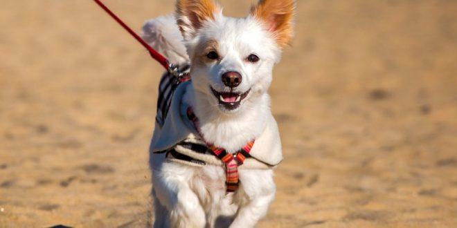 La salute del cane: alcuni consigli per il suo benessere