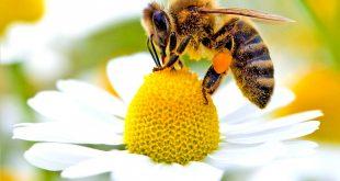 Le api, meravigliose creature che trasmettono la vita