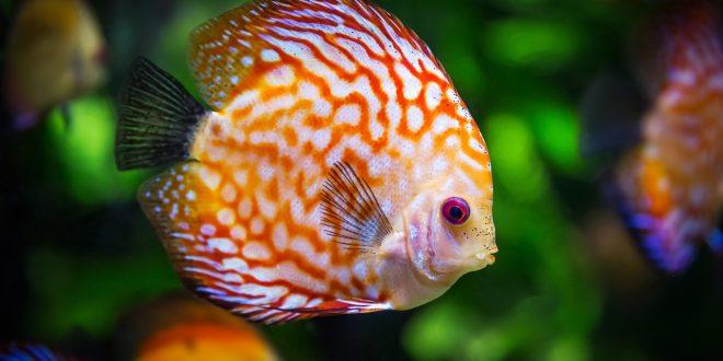 Allestire un acquario: i consigli per il principiante