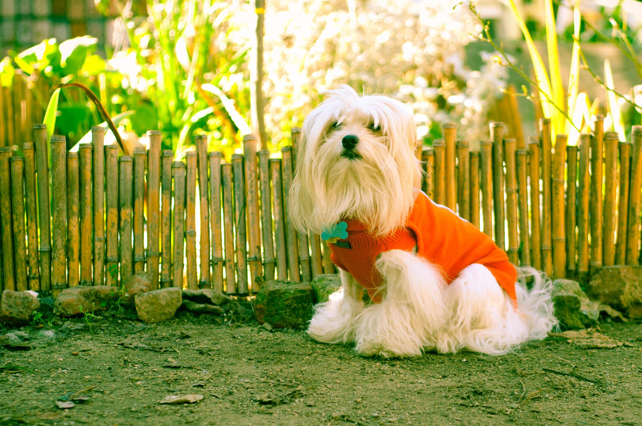 7b197881b2eb Migliori capi di abbigliamento online per cani di tutte le taglie -  AnimaliNet.it