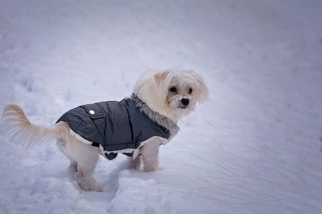 751ae6a34eab Migliori capi di abbigliamento online per cani di tutte le taglie ...