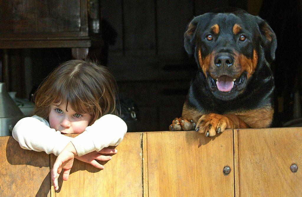 Il Rottweiler se addestrato è adatto a stare con i bambini