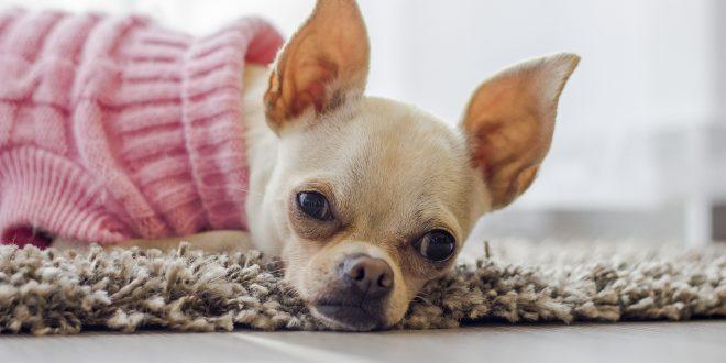 Maglioncino protezione freddo per cani piccola taglia