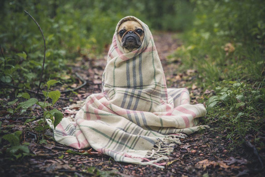 Protezione dal freddo per cani di piccola taglia carlino