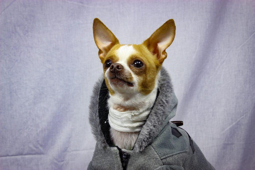 impermeabili e cappotti per can i di piccola taglia contro il freddo