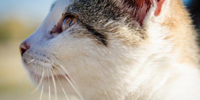 malattie animali da compagnia
