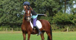 Cavalli: che passione! Guida agli accessori per l'equitazione