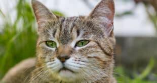 Come far mangiare il gatto quando rifiuta il cibo