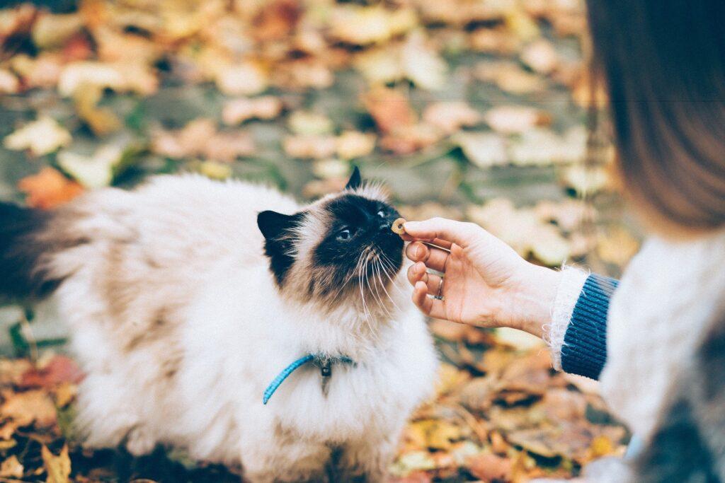 gatti e cibo