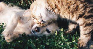 Cos'è e perché conviene stipulare un'assicurazione per animali domestici (002)